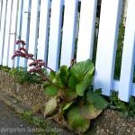 Zaun im Waldorfkindergarten Baden-Baden